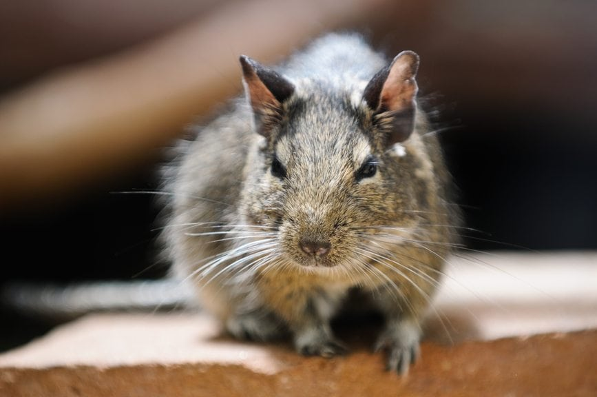 Prevent Rodent Infestations in Your Lower Level